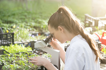 Agronomist with microscope in greenhouse