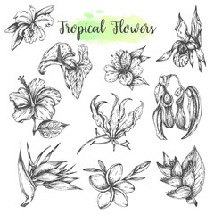 Tropical flowers Hand drawn bird of paradise flower, hibiscus, frangipani. Floral tropic set. Vector illustration