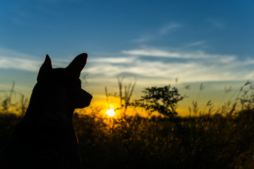 the dog and sunrise