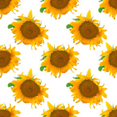 Vector seamless pattern with realistic sunflowers isolated on white background.