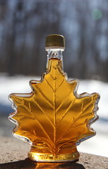 Bottle of maple syrup, outdoors in spring