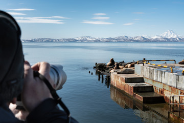 Photographer shoots on camera wild animals Steller Sea Lion or Northern Sea Lion