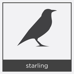 starling icon isolated on white background