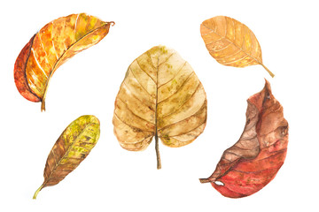 Set of five watercolor dry leaves on white background, leaf art concept