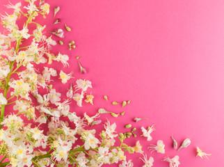 Sprinf Flower Background