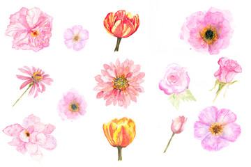 Set of blossom flower on white background, watercolor illustrator