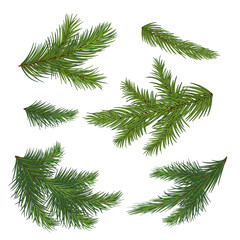 Set of spruce branch isolated on white background. Realistic Christmas tree. Vector illustration. Eps 10.