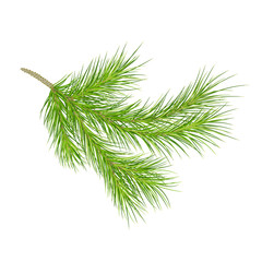 A branch of pine.  close-up. Isolated. Vector illustration. Eps 10.