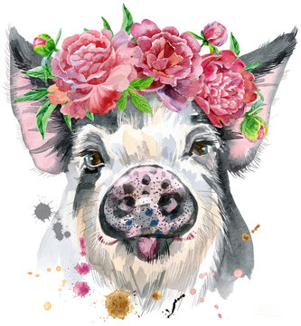 Watercolor portrait of pig