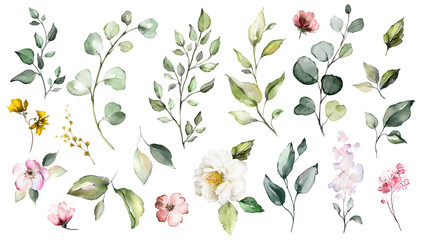 Big Set watercolor elements - wildflowers, herbs, leaf. collection garden and wild, forest herb, flowers, branches.  illustration isolated on white background, exotic  leaf. Botanic