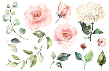 Set watercolor elements of roses, hydrangea.collection garden pink flowers, leaves, branches, Botanic  illustration isolated on white background.  bud of flowers Wall mural
