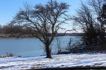The bare tree in the snow with the lake background.