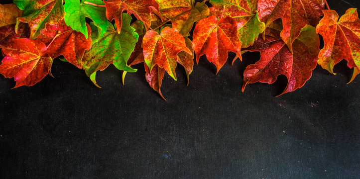 Autumnal concept wih bright red leaves