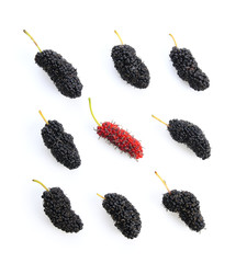 Mulberry berry isolated on white background