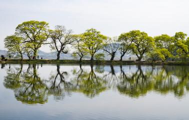 버드나무와 복사꽃이 어우러진 호수의 풍경
