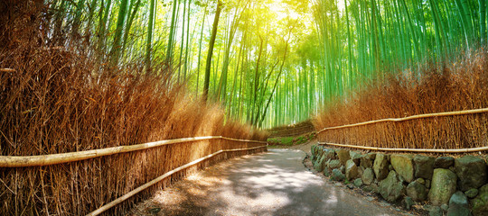 Poster Bamboo Path in bamboo forest in Kyoto, Japan. Woods in Arashiyama destrict
