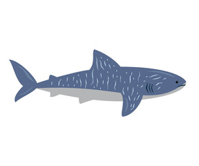 Cartoon shark on white background.