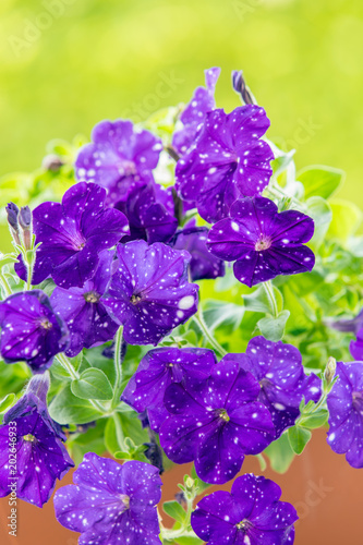 Vaso con fiori sul terrazzo \