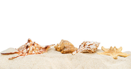 Pile of sand with seashells isolated on white.