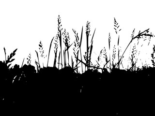 The silhouettes of the grass against the sky