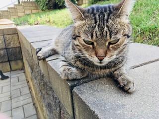 cat  park grass outdoor