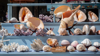 Sea shells for sale in a fishing village in southern Italy.