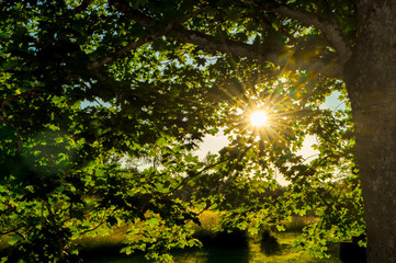 Sunlight shining through leaves