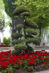 decorative tree in Gulhane park
