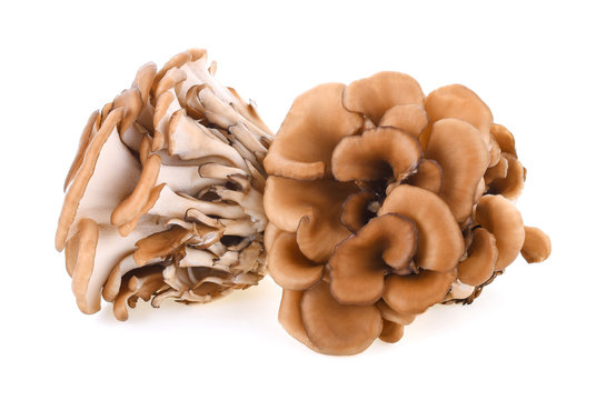 maitake mushrooms on white background