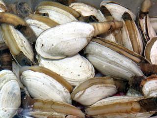 Thornhill the edible shells 2018