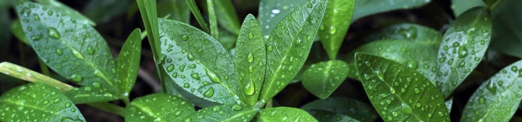 Banner of green bush after rain