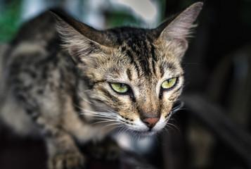 A closeup of a cat in a fierce mood