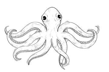 Octopus. Hand drawn sketch