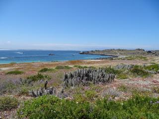 Ile Humboldt Chili plage