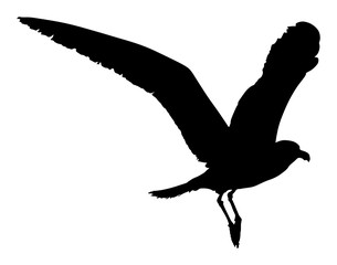 Seagull fly vector silhouette on white background, wings spread. Bird fly silhouette.