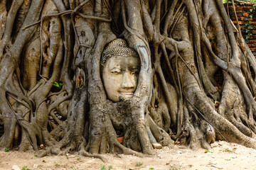 A temple in Ayutthaya with the head of the Buddha hidden in the banyan tree.
