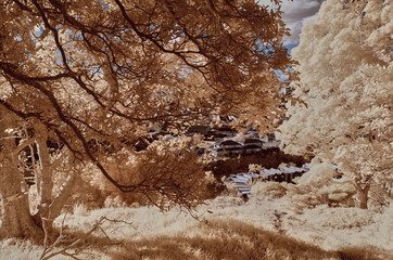 Landscape in false colors taken with an infrared modified camera