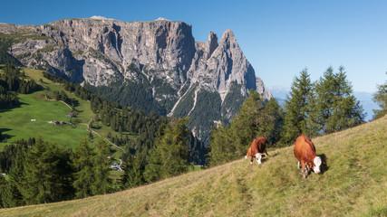 Blick auf den Schlern auf der berühmten Seiseralm, Südtirol