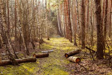 Road in the national park, Kampinos National Park (Kampinoski Park Narodowy), Mazovia, Poland.