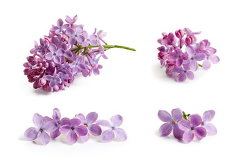 Foto auf Leinwand Flieder Purple lilac flower on white background