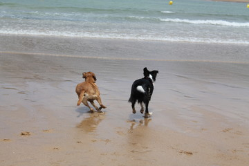 Laska & Duna disfrutando de la playa
