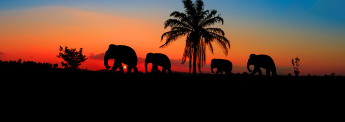 panorama silhouette elephant herd animals wildlife walking in twilight sunset beautiful background. with copy space add text