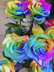 Fiore, Rosa Colorata, Rose Colorate, Rose