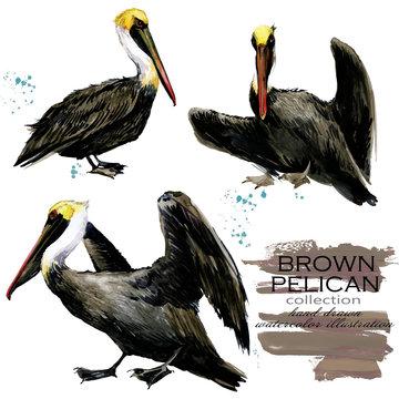 Brown Pelican hand drawn watercolor illustration set