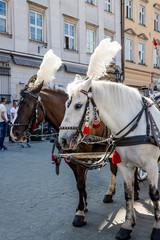 Calèches sur la place Rynek Głowny