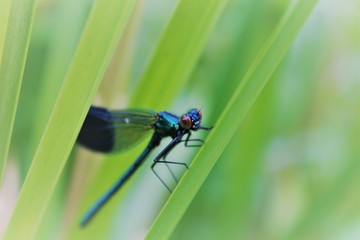 Dragonfly by canal