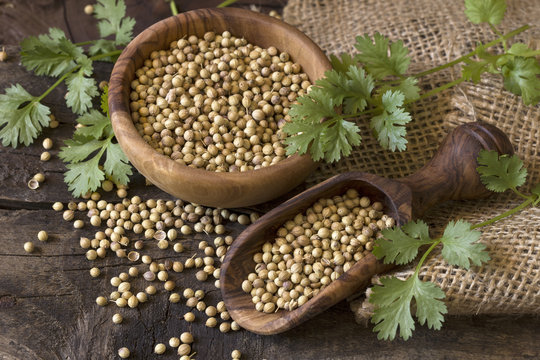 Coriander seed and leaves