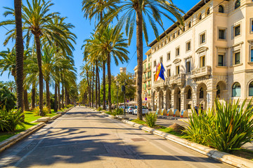 Wall Mural - MAJORCA ISLAND, SPAIN - APR 13, 2013: Alley with palm trees and historic buildings in old town of Palma de Majorca, capital of the island, very popular tourist destination in Balearic Archipelago.