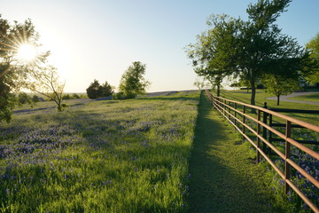 View along Texas Bluebonnets trail during spring time around the Texas Hill Country Fotoväggar