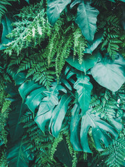 tropical green leaves background. nature spring concept, green leaf texture background.
